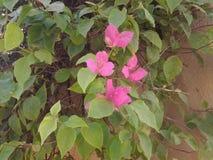 Ρόδινα πράσινα φύλλα λουλουδιών Στοκ εικόνες με δικαίωμα ελεύθερης χρήσης
