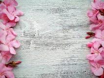 ρόδινα σύνορα και πλαίσιο λουλουδιών στο άσπρο ξύλινο υπόβαθρο Στοκ Εικόνες