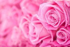 Ρόδινα τριαντάφυλλα Στοκ Φωτογραφίες