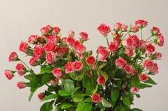 Ρόδινα τριαντάφυλλα ανθοδεσμών ως κινηματογράφηση σε πρώτο πλάνο καρδιών στοκ εικόνες