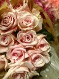 ρόδινα τριαντάφυλλα ανθο& Στοκ εικόνα με δικαίωμα ελεύθερης χρήσης