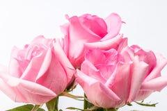 ρόδινα τριαντάφυλλα δεσμώ Στοκ φωτογραφία με δικαίωμα ελεύθερης χρήσης
