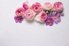 Ρόδινα τριαντάφυλλα και ιώδη λουλούδια θερινών clematis στο γκρίζο backgroun Στοκ εικόνες με δικαίωμα ελεύθερης χρήσης
