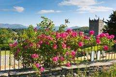 Ρόδινα τριαντάφυλλα και περιοχή Αγγλία UK λιμνών εκκλησιών Hawkshead σε ένα όμορφο ηλιόλουστο χωριό τουριστών θερινής ημέρας δημο Στοκ Φωτογραφία