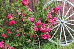 Ρόδινα τριαντάφυλλα με την άσπρη ρόδα βαγονιών εμπορευμάτων Στοκ εικόνα με δικαίωμα ελεύθερης χρήσης