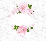 Ρόδινα τριαντάφυλλα σε άσπρο τσαλακωμένο χαρτί το πλαίσιο αυξήθηκε Επίπεδος βάλτε Τοπ όψη Στοκ Φωτογραφίες