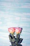 Ρόδινα τριαντάφυλλα στο μπλε υπόβαθρο Στοκ Εικόνες