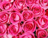 Ρόδινα τριαντάφυλλα στοκ εικόνα