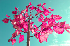Ρόδινα φύλλα Στοκ Εικόνες
