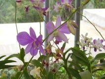 Ρόδινα orchids Στοκ φωτογραφία με δικαίωμα ελεύθερης χρήσης