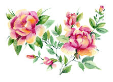 ρόδινα peonies watercolor Στοκ εικόνα με δικαίωμα ελεύθερης χρήσης