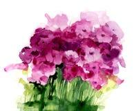 Ρόδινα wildflowers Watercolor Στοκ Εικόνα