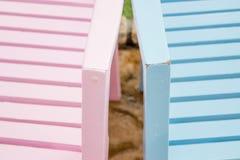 Ρόδινες και μπλε καρέκλες Στοκ Φωτογραφία