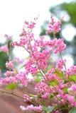 Ρόδινες λουλούδια και μέλισσες Στοκ εικόνες με δικαίωμα ελεύθερης χρήσης