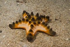 Ρόδινες πορτοκάλι και ομάδα αστεριών Μαύρης Θάλασσας σχετικά με το υπόβαθρο άμμου Στοκ Εικόνες