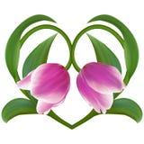 Ρόδινες τουλίπες στη Floral καρδιά για την ημέρα βαλεντίνων Σύμβολο αγάπης στο ro Στοκ φωτογραφία με δικαίωμα ελεύθερης χρήσης