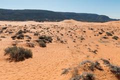 ρόδινη άμμος αμμόλοφων κορ&al Στοκ Εικόνα