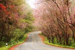 Ρόδινη άποψη τοπίων sakura σχετικά με το δρόμο στο ANG Khang, Γ Doi Στοκ φωτογραφία με δικαίωμα ελεύθερης χρήσης