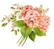 Ρόδινη άσπρη γαμήλια ανθοδέσμη λουλουδιών διανυσματική απεικόνιση
