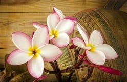 Ρόδινη δέσμη plumeria λουλουδιών με το παλαιές ψημένες βάζο και την ξυλεία W αργίλου Στοκ Εικόνες