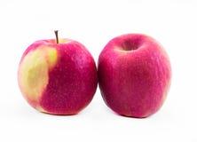 Ρόδινη - κίτρινα μήλα σε ένα άσπρο υπόβαθρο - μπροστινή άποψη δύο Στοκ φωτογραφία με δικαίωμα ελεύθερης χρήσης