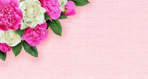 Ρόδινη και άσπρη ρύθμιση γωνιών λουλουδιών peonies στον καμβά Στοκ Φωτογραφίες