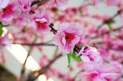 Ρόδινη πλαστική διακόσμηση λουλουδιών sakura άνοιξη Στοκ Εικόνες