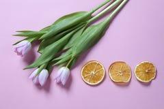 Ρόδινη ρύθμιση λουλουδιών τουλιπών με την ξηρά πορτοκαλιά φέτα στο ρόδινο υπόβαθρο Copyspace Στοκ εικόνες με δικαίωμα ελεύθερης χρήσης