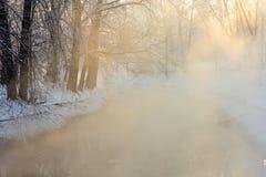Ρόδινη υδρονέφωση Στοκ φωτογραφία με δικαίωμα ελεύθερης χρήσης