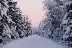Ρόδινη χειμερινή σκηνή Στοκ Εικόνες