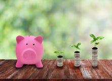 Ρόδινη piggy αύξηση τραπεζών και νομισμάτων στην ξύλινη επιτραπέζια κορυφή στο πράσινο natur Στοκ Εικόνες