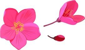 Ρόδινοι λουλούδια και οφθαλμός Στοκ φωτογραφίες με δικαίωμα ελεύθερης χρήσης