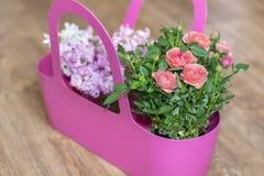 ρόδινοι τριαντάφυλλα και υάκινθος σε ένα ρόδινο καλάθι Στοκ Φωτογραφίες