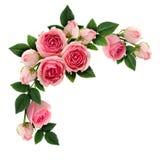 Ρόδινος αυξήθηκε λουλούδια και βλαστάνει τη ρύθμιση κύκλων Στοκ Φωτογραφίες