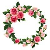Ρόδινος αυξήθηκε λουλούδια και βλαστάνει το πλαίσιο κύκλων Στοκ Φωτογραφία