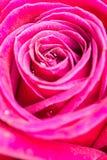 Ρόδινος αυξήθηκε πέταλο, αφηρημένη έννοια φύσης, αφηρημένο backgrou φύσης Στοκ Εικόνες