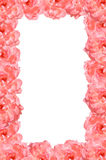 Ρόδινος αυξήθηκε πλαίσιο λουλουδιών Στοκ φωτογραφίες με δικαίωμα ελεύθερης χρήσης