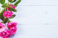 Ρόδινος αυξήθηκε σε ένα μπλε ξύλινο υπόβαθρο Στοκ εικόνες με δικαίωμα ελεύθερης χρήσης