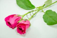 Ρόδινος αυξήθηκε, συμμετέχει το δαχτυλίδι με την αγάπη στην ημέρα βαλεντίνων Στοκ Εικόνες