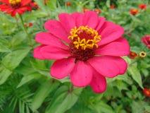 Ρόδινος εξωτικός κήπος λουλουδιών Στοκ Εικόνα