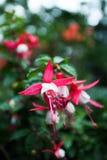 Ρόδινος κήπος λουλουδιών Στοκ Εικόνες