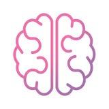 Ρόδινος και πορφυρός εγκέφαλος διανυσματική απεικόνιση
