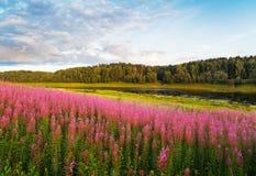 Ρόδινος κόσμος στα πορτοκαλιά λουλούδια που αρχειοθετούνται Στοκ εικόνες με δικαίωμα ελεύθερης χρήσης