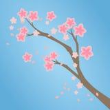 Ρόδινος κλάδος ανθών κερασιών Sakura Στοκ Φωτογραφίες