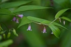 ρόδινος μικροσκοπικός λουλουδιών Στοκ φωτογραφία με δικαίωμα ελεύθερης χρήσης