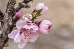 ρόδινος μικρός λουλουδιών Στοκ Εικόνες