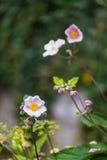ρόδινος μικρός λουλουδιών Στοκ φωτογραφία με δικαίωμα ελεύθερης χρήσης