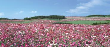 Ρόδινος τομέας λουλουδιών στοκ φωτογραφία με δικαίωμα ελεύθερης χρήσης
