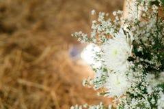 Ρόδινος λωτός Στοκ Φωτογραφίες