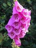 Ρόδινο άγριο λουλούδι στη νέα γη Στοκ εικόνα με δικαίωμα ελεύθερης χρήσης